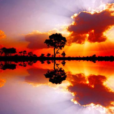 African nature. Acacia Tree